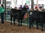 2019 Cattle Show