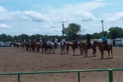 Open Horse 3