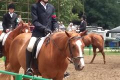 Open Horse 4